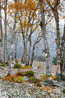 Landscape, Fall, Birch, Trees, Leaves, Snow, Lake, Wood