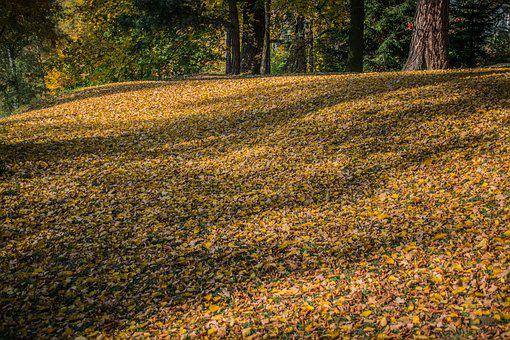 Autumn, Leaves, Forest, Colorful, Nature, Park, Dry