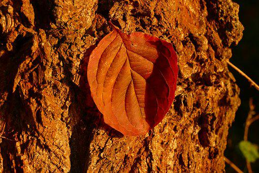 Letter, Bark, Tree, Forest