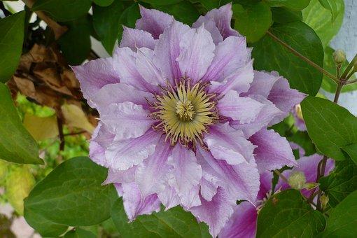 Flower, Close Up, Macro, Summer, Blossom, Bloom, Nature