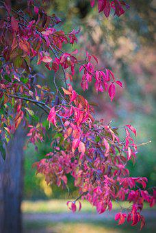 Autumn, Tree, Leaves, Mood, Fall Color, Nature, Red
