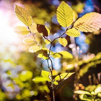 Grass, Rosa, Autumn, Morning, Green, Bokeh, Dewdrop