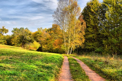 Front Weidenthal Has, Autumn, Green, Nature, Landscape