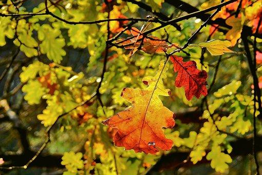Foliage, Golden Polish Autumn, Landscape, Tree, Nature