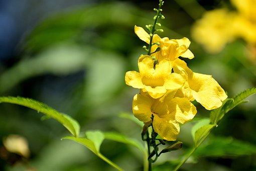 Flower, Leaves, Branch, Bloom, Nature