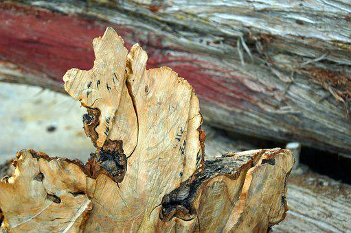 Wood, Olive Wood, Olive, Natural, Grain, Solid Wood