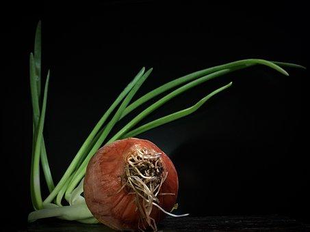 Onion, Stems, Outbreak, Plant, Garden