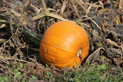 Pumpkin, Fall, Autumn, Orange, October, Jack-o-lantern