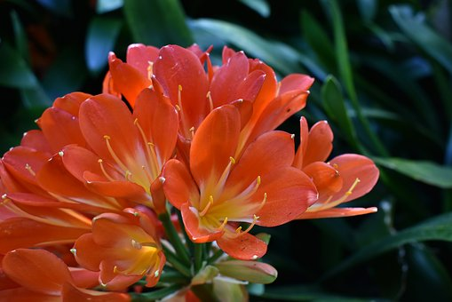 Flower, Red, Yellow, Nature, Bloom, Blossom, Petals
