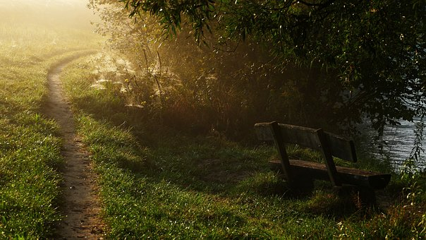 Nature, Bank, River, Away, Bench, Autumn, Morning Mist
