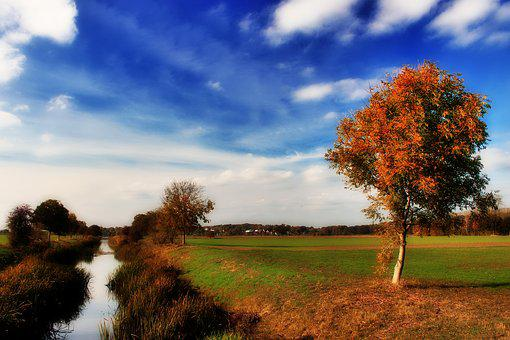 Autumn, Tree, River, Bach, All, Northern Germany