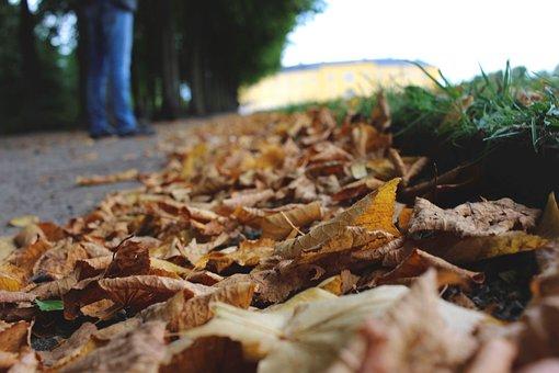 Leaves, Autumn, Golden Season, Season, Detail