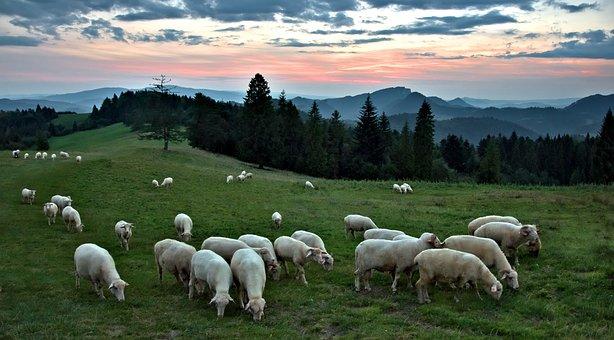 Sunset, Sheep, Mountains, Grazing, Landscape, Sky