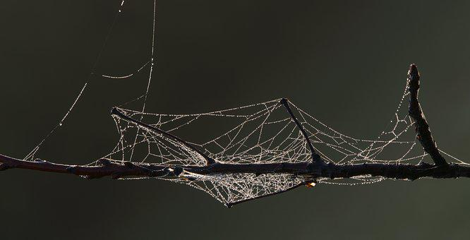 Spider Web, Morgentau, Drop Of Water, Fog, Backlighting