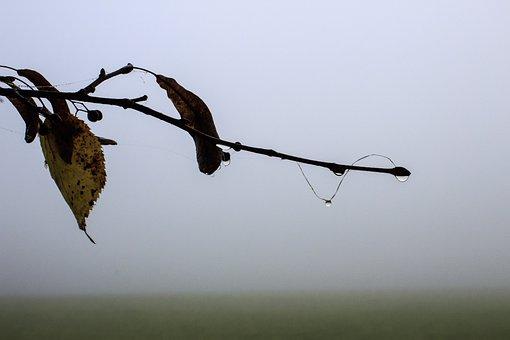 Fog, Linde, Branch, Seeds, Spinnfaden, Drop Of Water