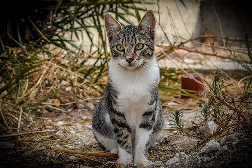 Cat, Stray, Outdoors, Animal, Cute, Looking, Eyes