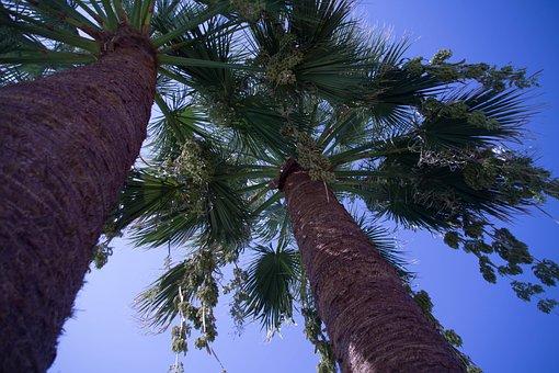 Summer, Sky, Palm Trees