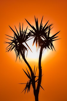 Cactus, Sunset, Sun, Silhouette, Evening, Plant, Nature