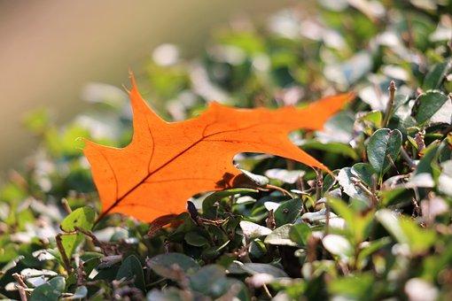 Brown Leaf, Transparent, Autumn
