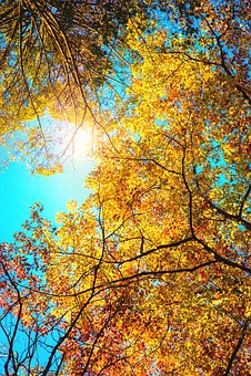 Autumn, Orange, Leaves, Forest, Sun, Tree, Park, City
