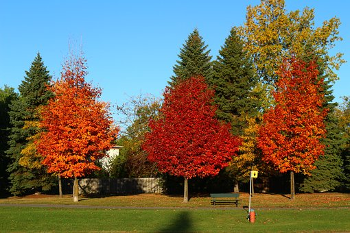 Tree, Fall, Nature, Autumn, Forest, Landscape, Trees
