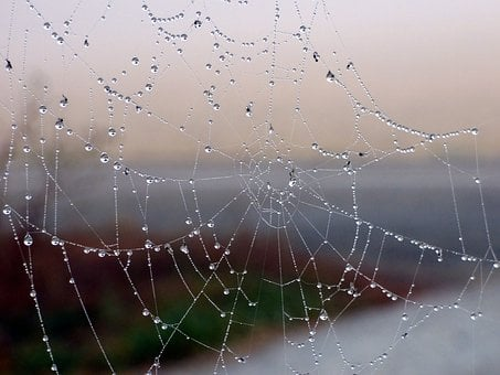 Canvas, Spider, Nature, Dew, Beads, Water, Light