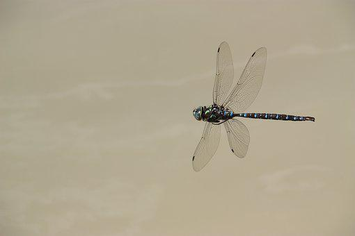 Dragonfly, Fly, Insect, Wing, Flying, Flight, Nature