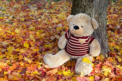 Autumn, Toy, Leaves, Bear, Cute, Entertainment