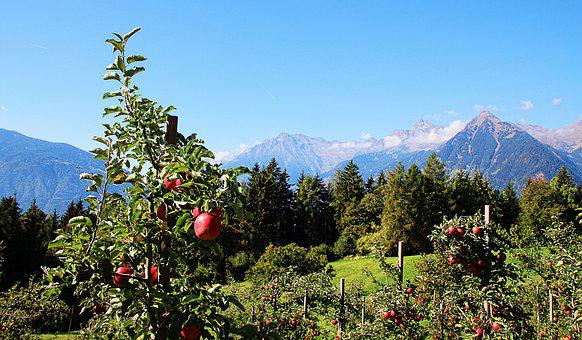 Apple, Mountains, South Tyrol, Fruit, Autumn, Harvest