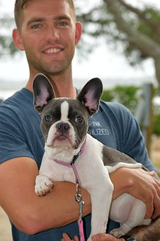French Bulldog, Pet, Breed, Puppy, Dog, Bulldog, Animal