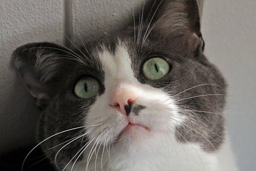 Cat, Looks, Eyes, Mustache, Look, Coat, Curiosity