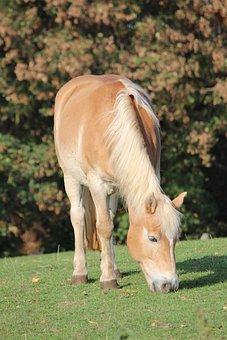 Horse, Gaul, Ride, Reiterhof, Farm, Meadow, Field