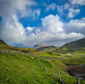 Meadow, Sheep, Road, Fence, Wide, Nature, Pasture