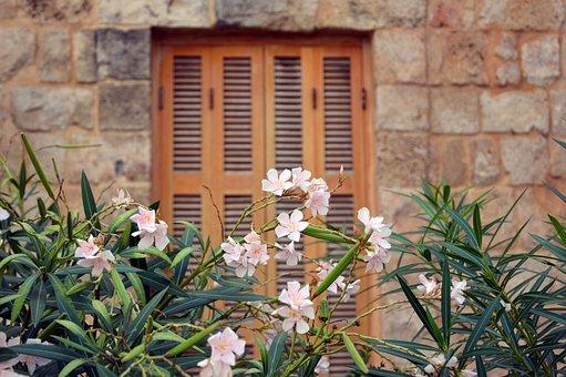 Oleander, Plant, Mediterranean, Flower, Flowers