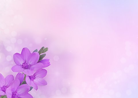 Background Image, Flower, Flowers, Purple, Pink