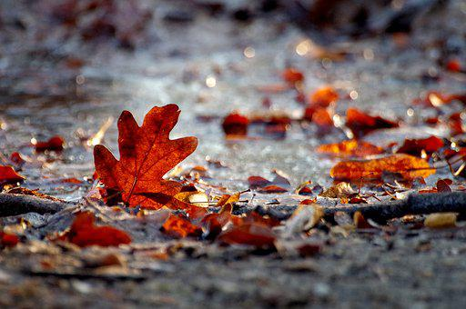 Autumn, Winter, Leaves, Red, Ice, Frozen, Nature