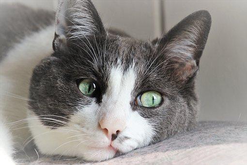 Cat, Ears, Musings, Mustache, Head, Look, Fur