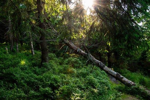 Forest, Sun, Nature, Landscape, Beskydy, Czech Republic