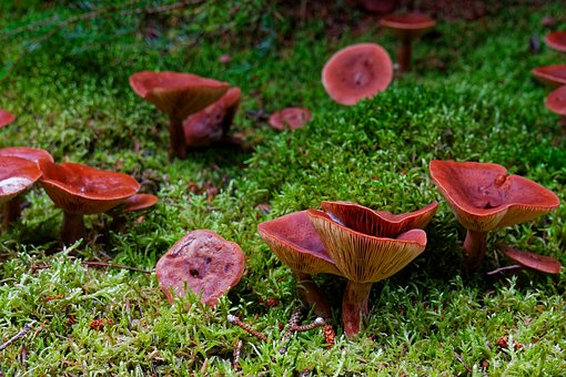 Mushrooms, Nature, Forest, Toxic, Forest Floor