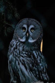 Bird, Owl, Nocturnal, Sitting, Animal World, Plumage
