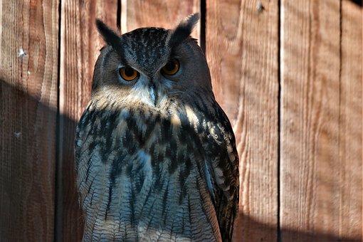 Bird, Owl, Plumage, Animal World, Nature, Nocturnal