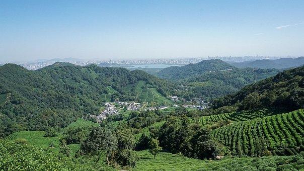 Tea Garden, Tea, Mountain Village, Terrace, Outdoor