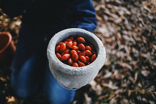 Rosehip, Autumn, Vase, Forest, Rosehips, Red, Fruit
