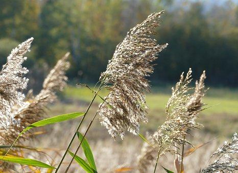 Sedge, Nature, Autumn, Landscape, Moorland