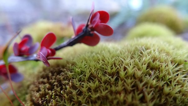 Spike, Moss, Plant, Closeup, Background, Unusual
