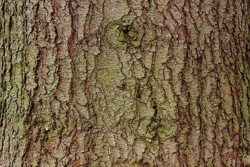 Bark, Tree, Spruce, Wood, Log, Bast, Grain, Structure
