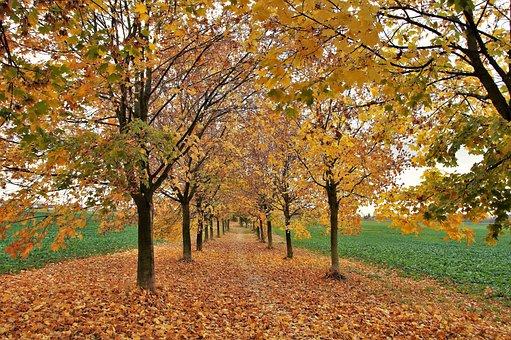 Autumn, Trees, Leaves, Fallen, Colored, Yellow, šustící