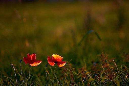 Flowers, Flora, Plant, Wild Flowers, Petals, Nature