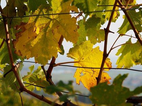 Vineyard, Grapes, Vine Leaves, Wine, Green, Wine Region