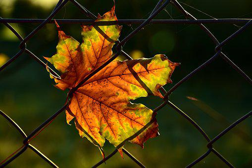 Leaf, Autumn, Fence, Close Up, Wire Fence